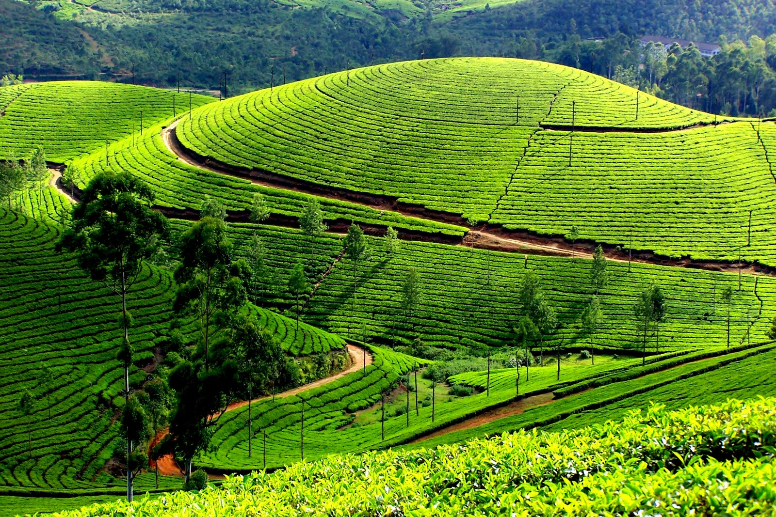 munnar-travel-guide