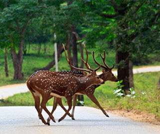 4 Days Wayanad Tour Package Image
