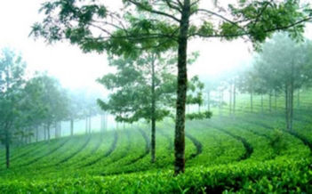 Munnar Tour Package Image