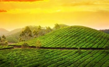 Munnar Honeymoon Package Image