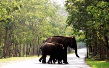 Wayanad Tour Package Image